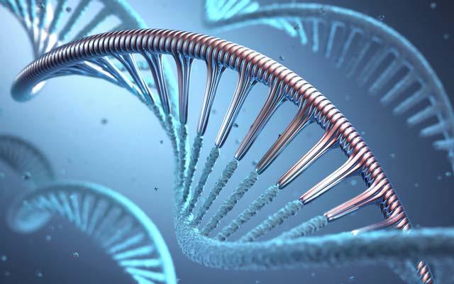 gene modification